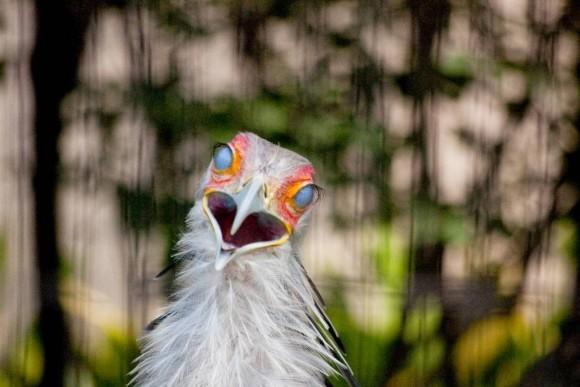 動物の目を守る第三の瞼、「瞬膜」を捕えた写真