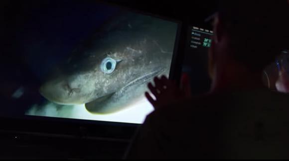 我々はもっと深海ザメの魅力を知るべきだ。謎に包まれた古代種「カグラザメ」にGPSを装着、その生態を探る