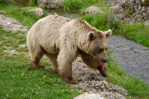 遭遇しただけで怖いのに、さらに銃で武装しているだと?銃を盗んだクマがシベリア界隈をうろついている件(ロシア)