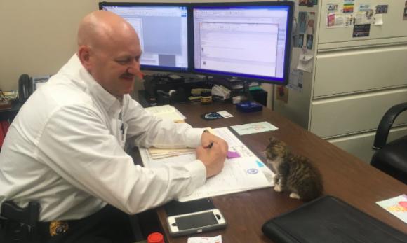 道路脇で救出された子猫、警察に届けられ署長が恋に落ちる。自らが飼い主となり署に勤務するように(アメリカ)