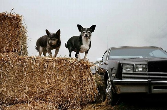 old_dogs_04