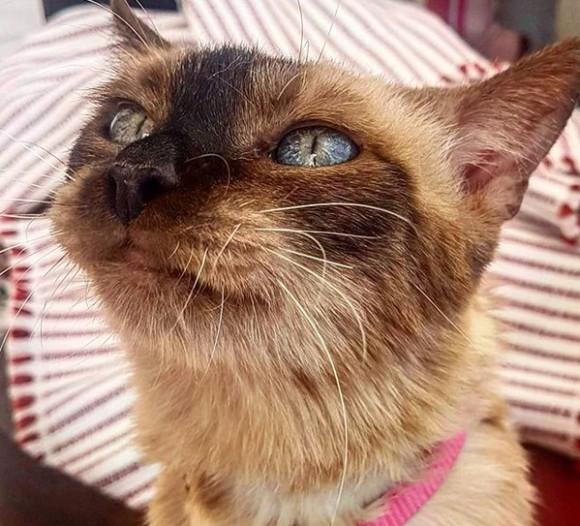 ロックダウン中に第二の家を持った猫