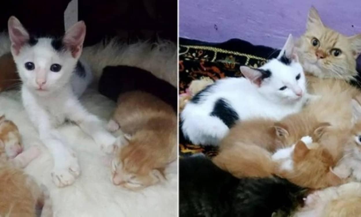 子育て中の母猫の懐に忍び込んだ孤独な子猫