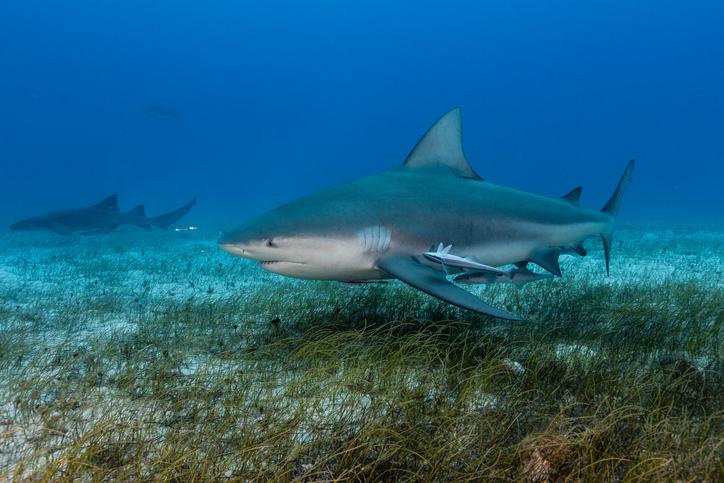 サメとワニが協定を結んだ?フロリダの川で仲良く併走して泳いでいる姿がとらえられる