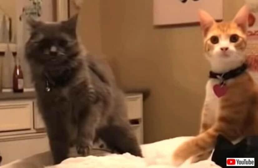 tiktokcats1_640