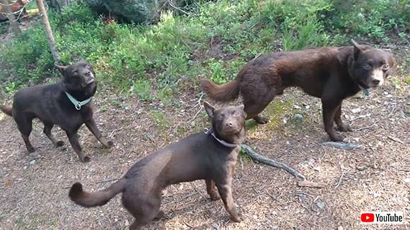 時が止まったのかと思うレベル!3匹の犬の完璧なる「待て」スタイル