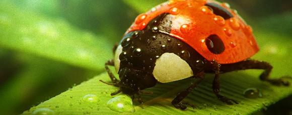 昆虫が痛みを感じない理由は寿命の短さにあった(米研究)