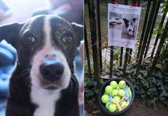 愛犬を亡くした飼い主。思い出の散歩道に愛犬の遊び道具を設置し、他の犬の飼い主たちに犬との思い出を分かち合うことに