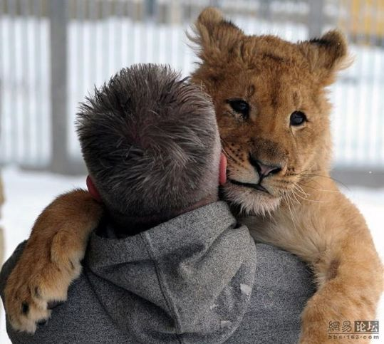 lion_and_man_05