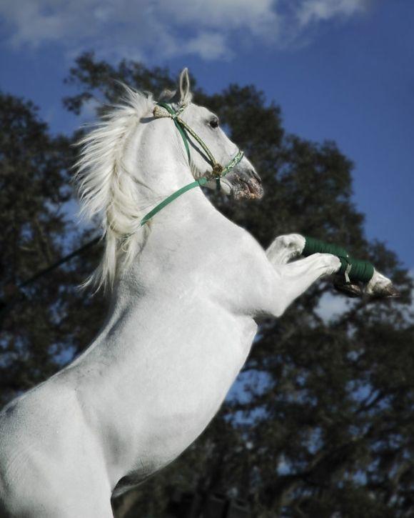 馬だって多種多様。おとぎ話に出てきそうな馬から、黄金の馬まで。あまり知られていない13種の馬