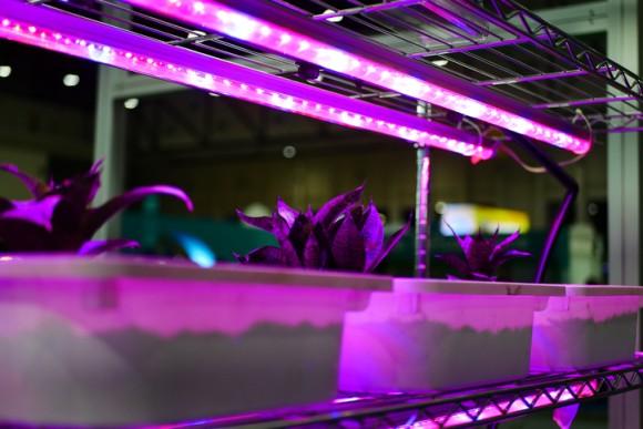 注目される人工光による室内農作物栽培。コスト削減の為の光の当て方が研究される(米研究)