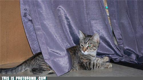 photobomb-that-guy-ghost-cat