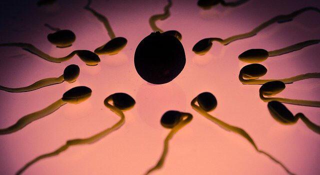 人間の卵子にも好みがある。好きな精子を選別しており、それは本体の好みとは無関係(スウェーデン・イギリス研究)
