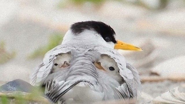 なにこれ魚?ママと子鳥のトランスフォームに海外掲示板がギョッとしていた模様