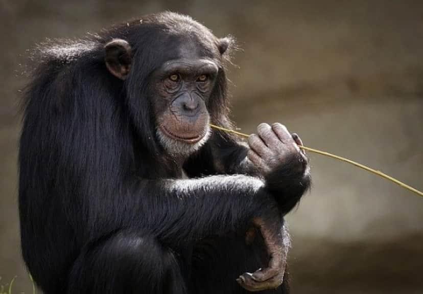 monkey-3703230_640_e