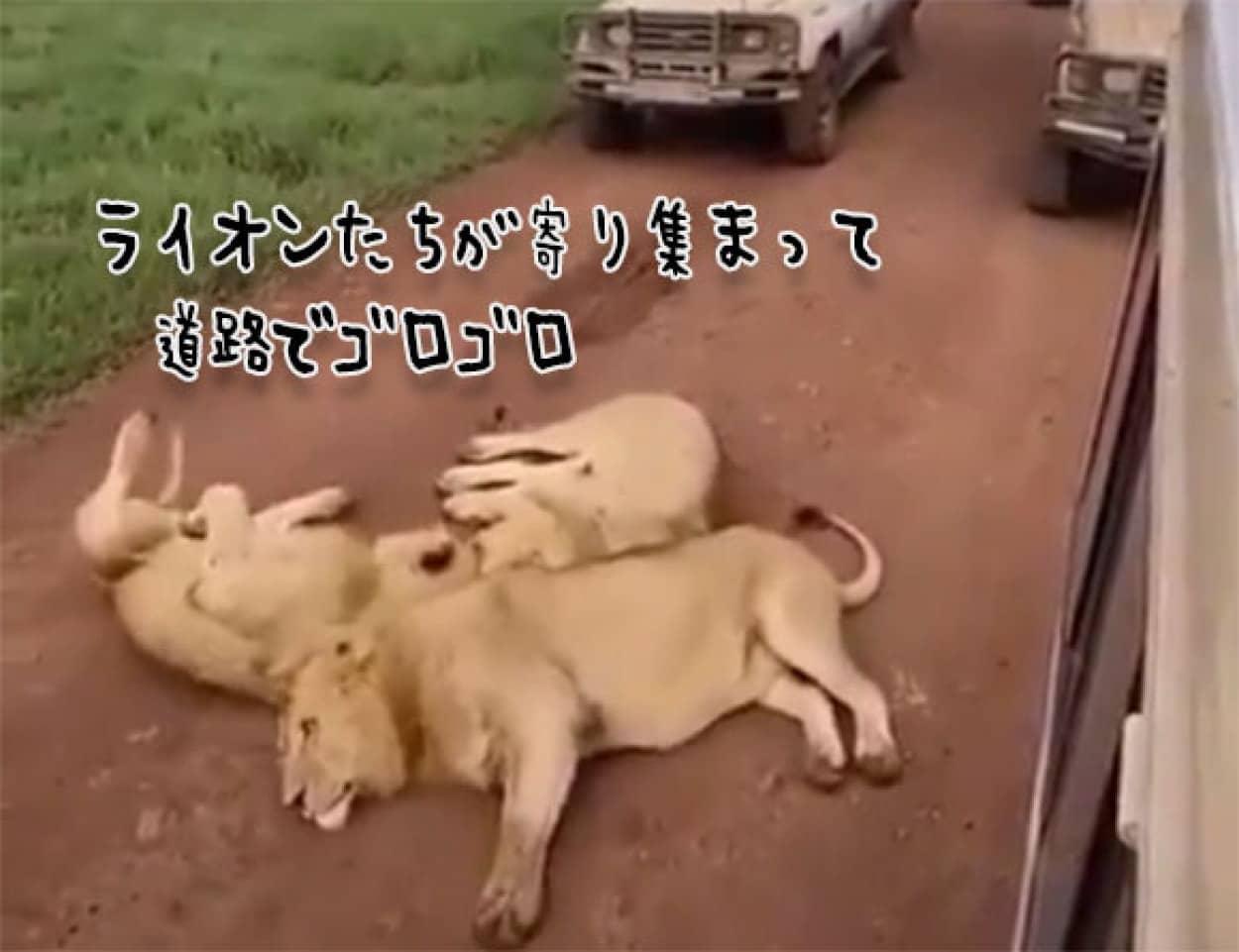 3頭のライオン団子