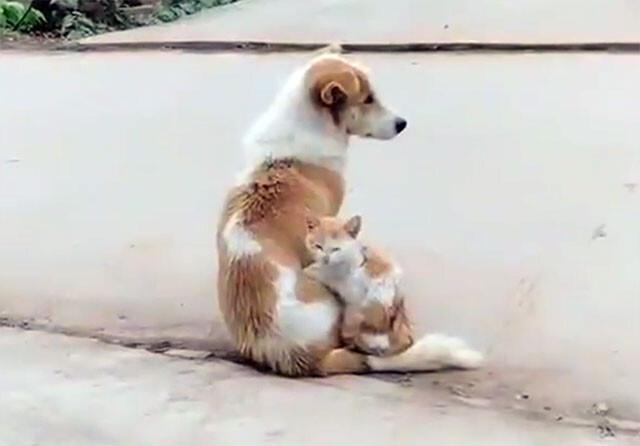 同じ柄の犬と猫が変形合体!
