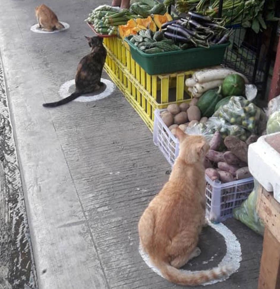 社会的距離のために円形のマークを描いたところ、猫が転送されてきた件(フィリピン)