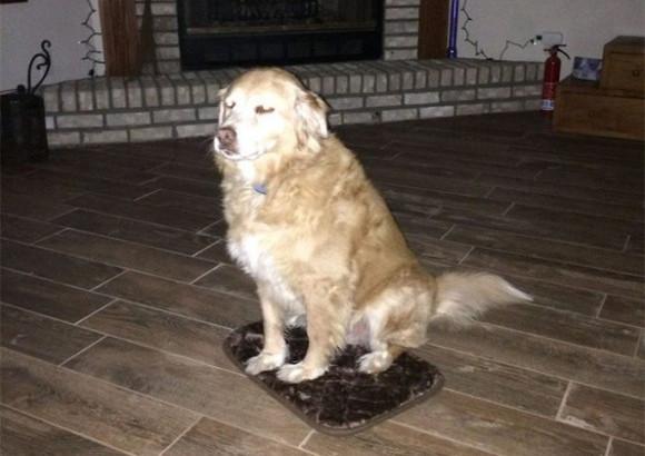 あまりにも小さかった。だがしかし、愛する飼い主がくれたものだから無理にでも愛用する犬の健気さが涙をそそる。