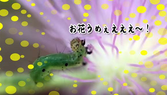 リアルハングリーキャタピラ。お花を美味しそうに食べるあおむし(イモムシ出演中)