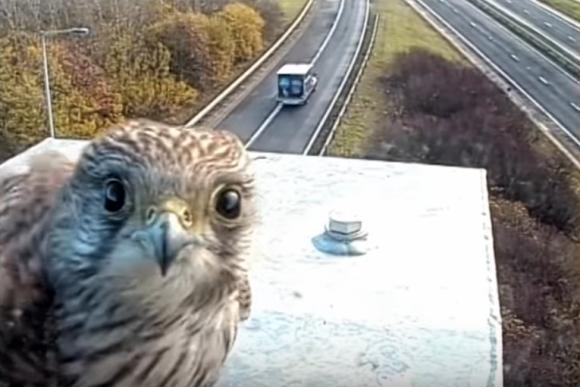 ん?なんかある?なんか見てる?好奇心が突出したチョウケンボウ、監視カメラにくぎ付け(イギリス)