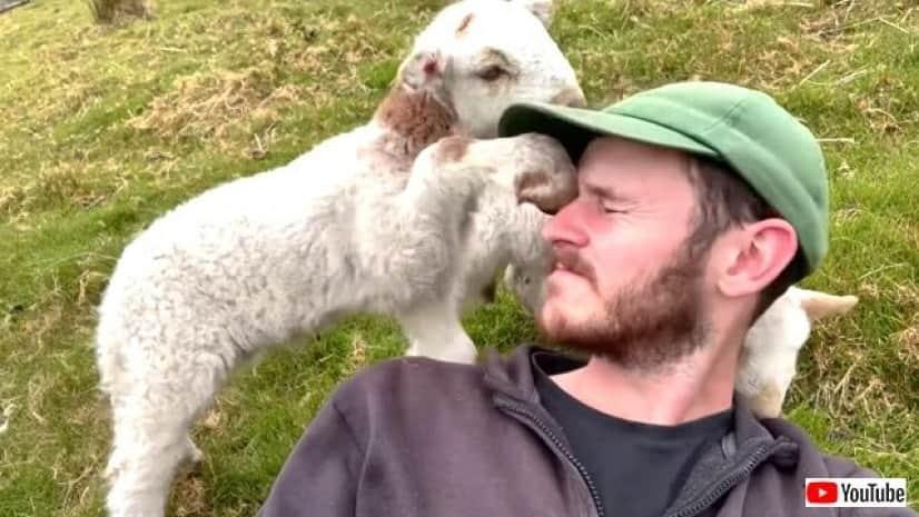 lamb1_640