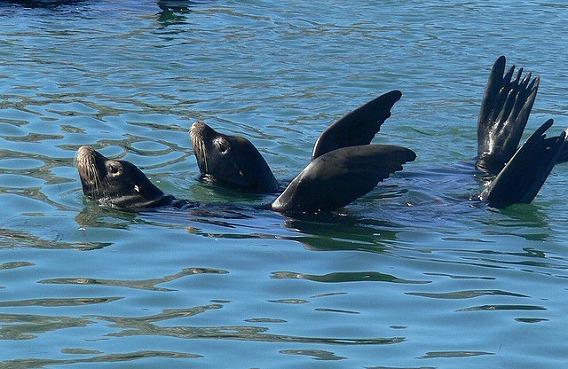 synchronized swimming animals 9
