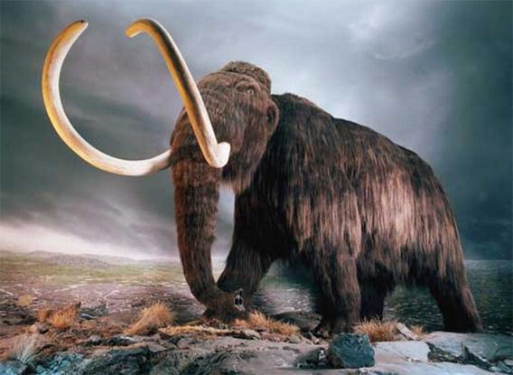マンモス が 絶滅 した の は 約 何 年 前