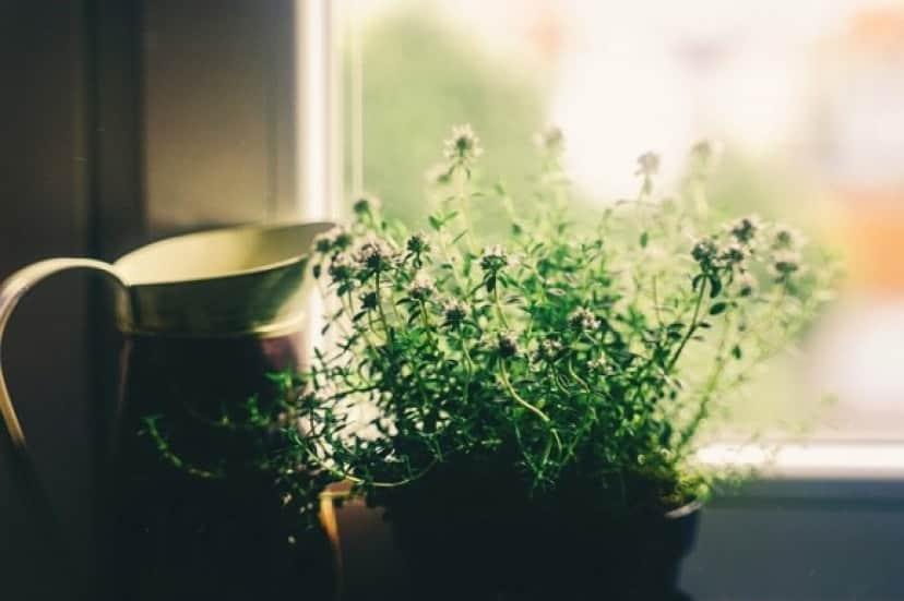 plant1_e