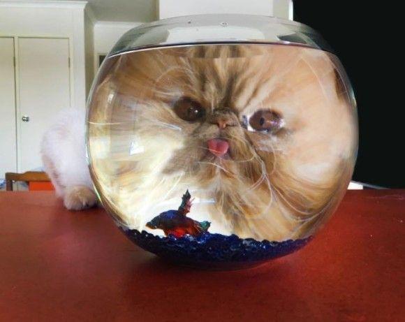 水槽をのぞく猫があまりにも神秘的なのでコラ職人がんばる