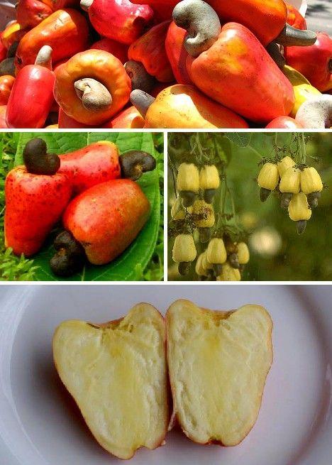 amazing_fruits_1
