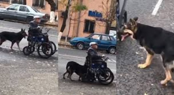 おじいさんは大切な人。飼い主おじいさんの車椅子を懸命に押す犬(カザフスタン)