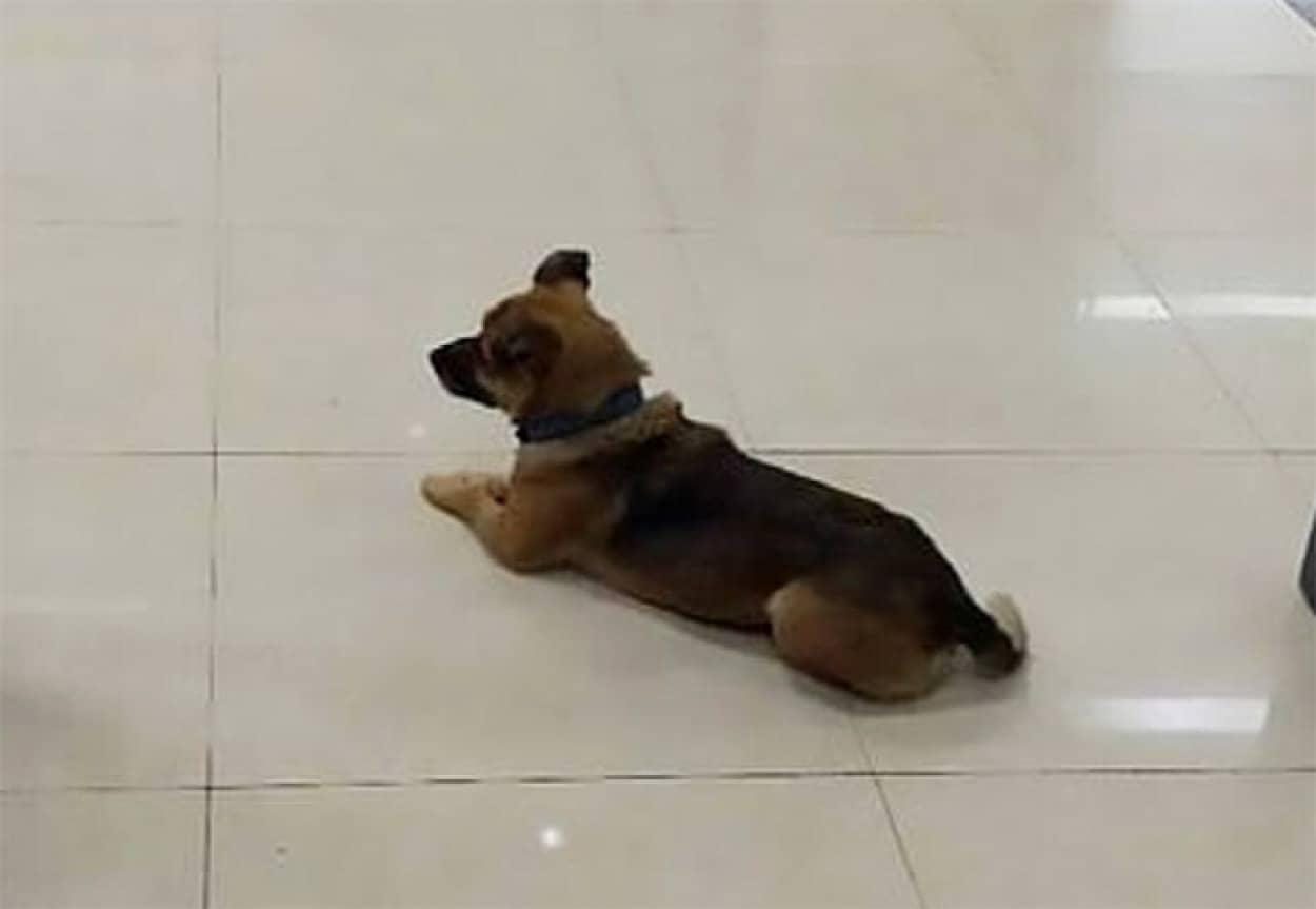帰らぬ飼い主を待ち続ける犬