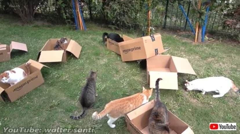 12cats8boxes1_640