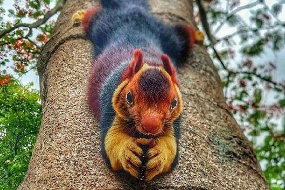 色のグラデーションが絶妙!ダークレインボーな毛皮と大き目のサイズ感が魅力のインドオオリスにズームイン!