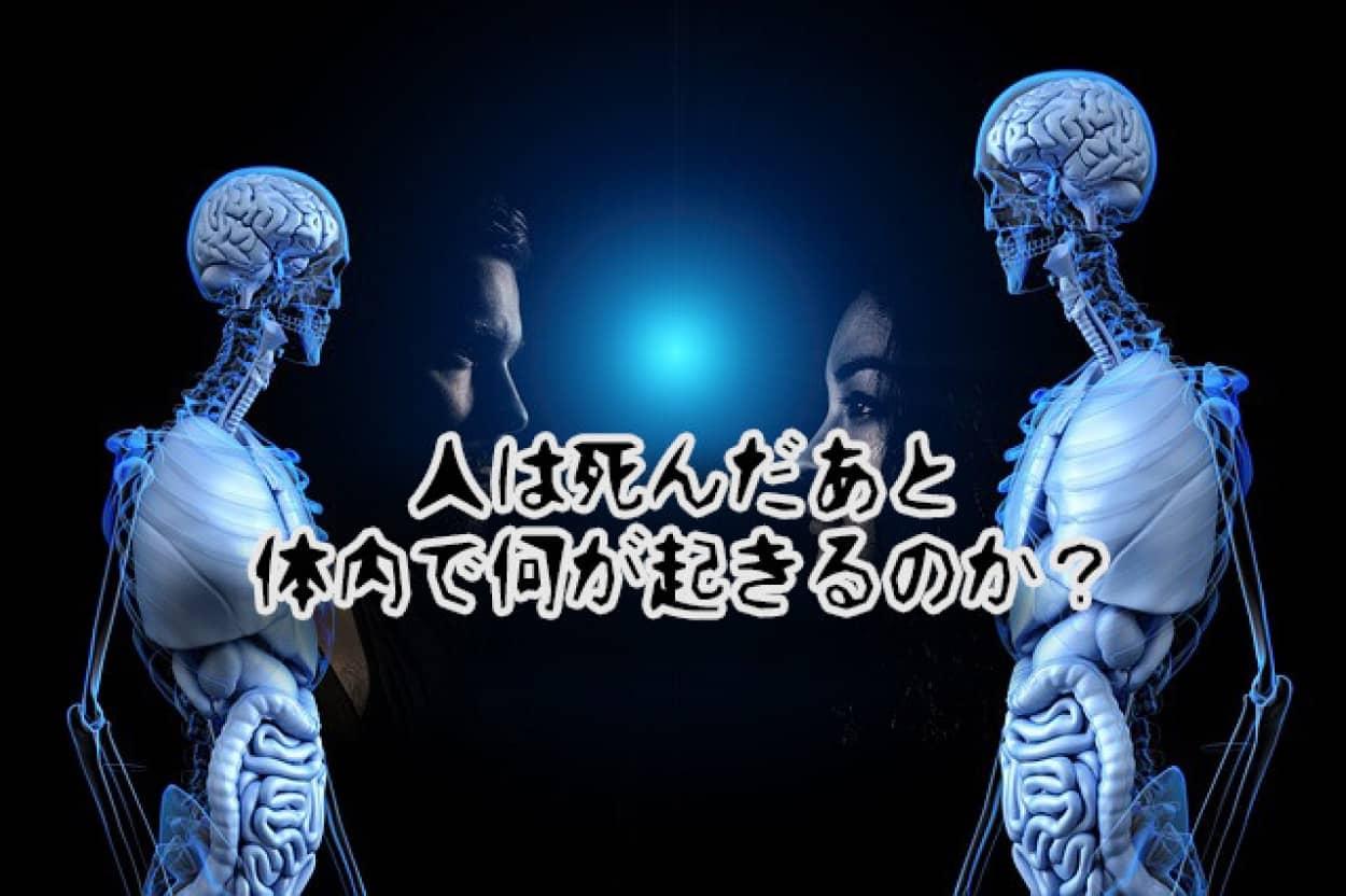 人の死後、体内で何が起きるのか?骨になるまでのプロセス