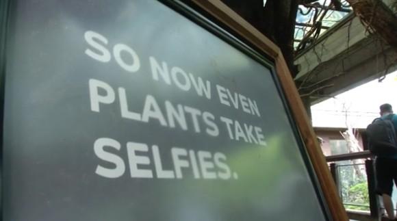 plant2_e