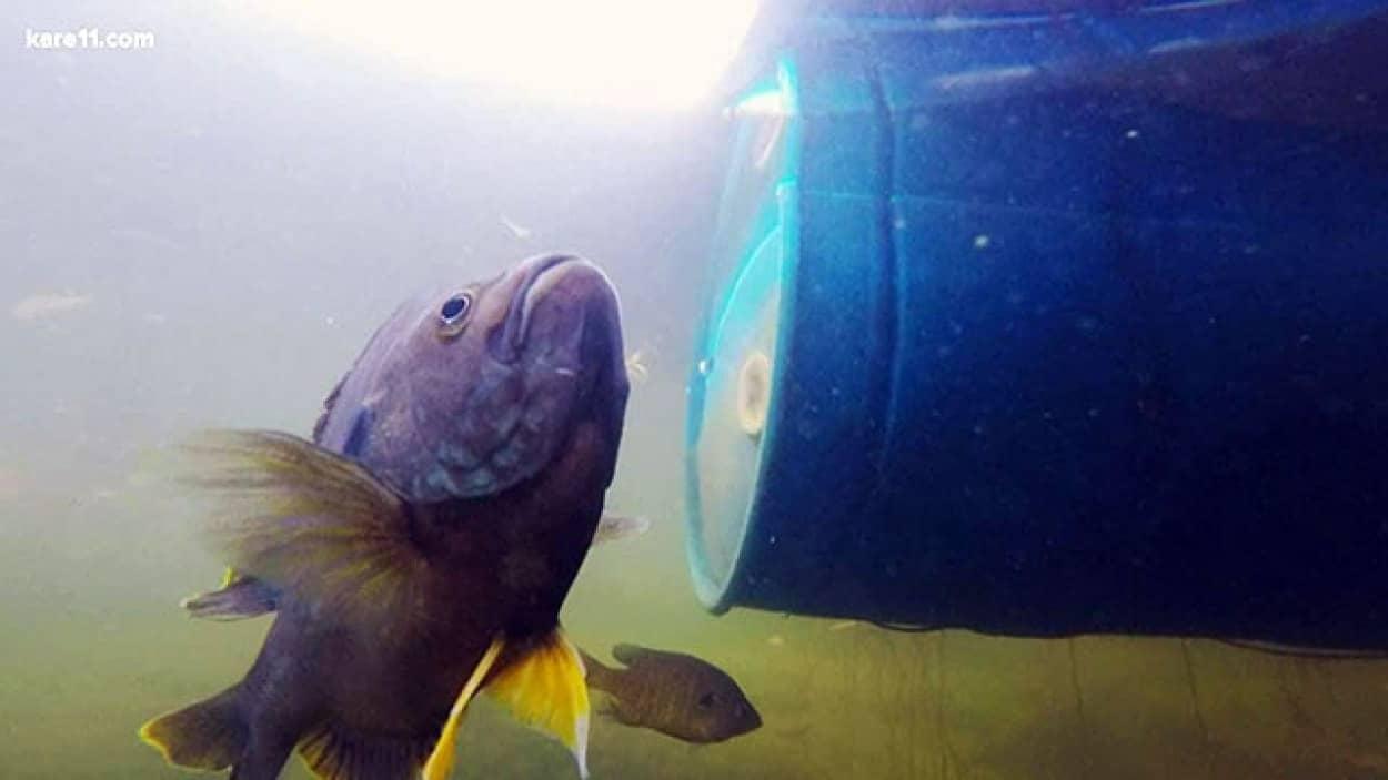 魚と友情を築いた女性の物語