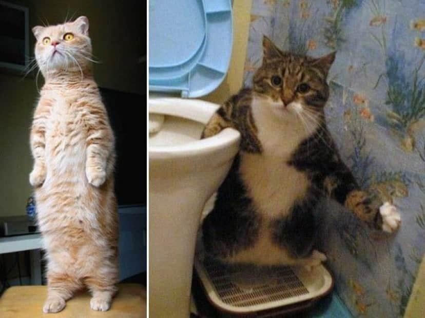 standing-cats19_e