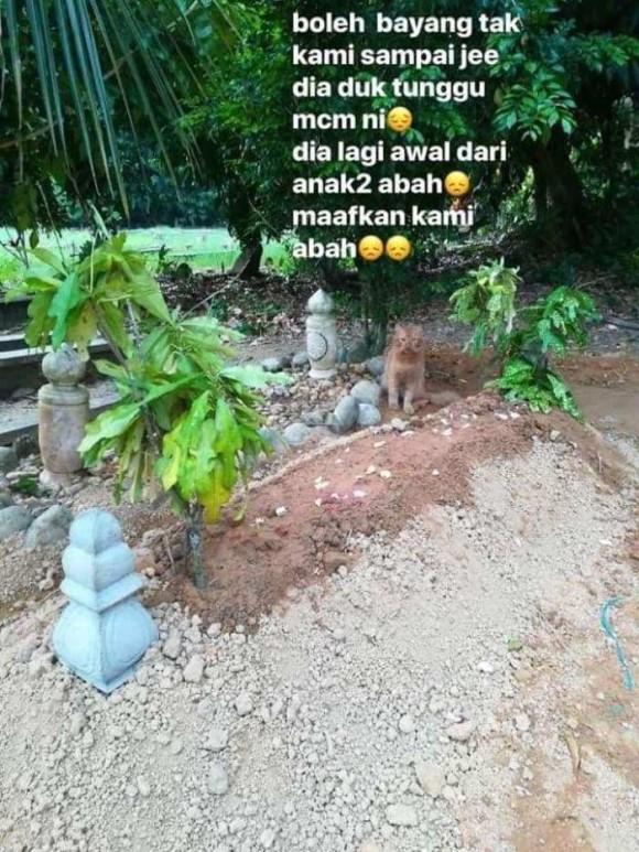 cat_e