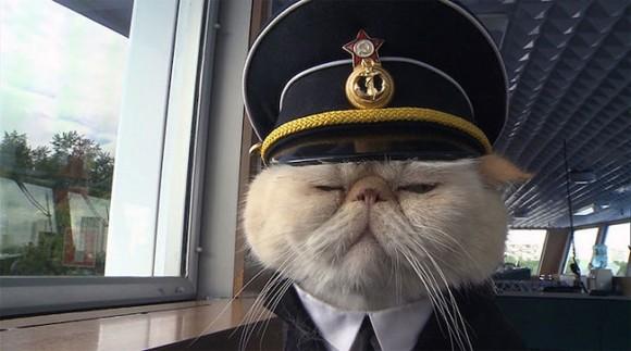 「たかが戦艦一隻何が怖い」 ロシアの船で安全を守る猫船長の貫録ったら!