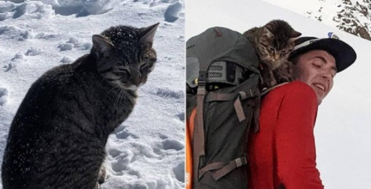 登山者を追いかけて高い雪山を3度も登頂した迷子の猫