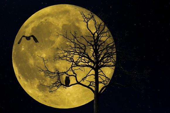 夜は枝の先端を下げて眠る。世界で初めて眠る木々の姿を観察(ハンガリー研究)