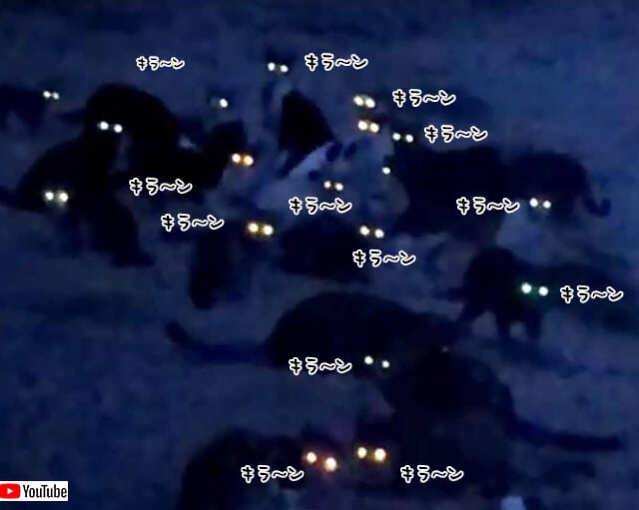 暗闇で光る無数の猫の群れの目