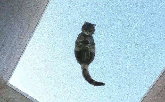funny-cats-on-glass-18-5c37545059013__605_e (2)_e