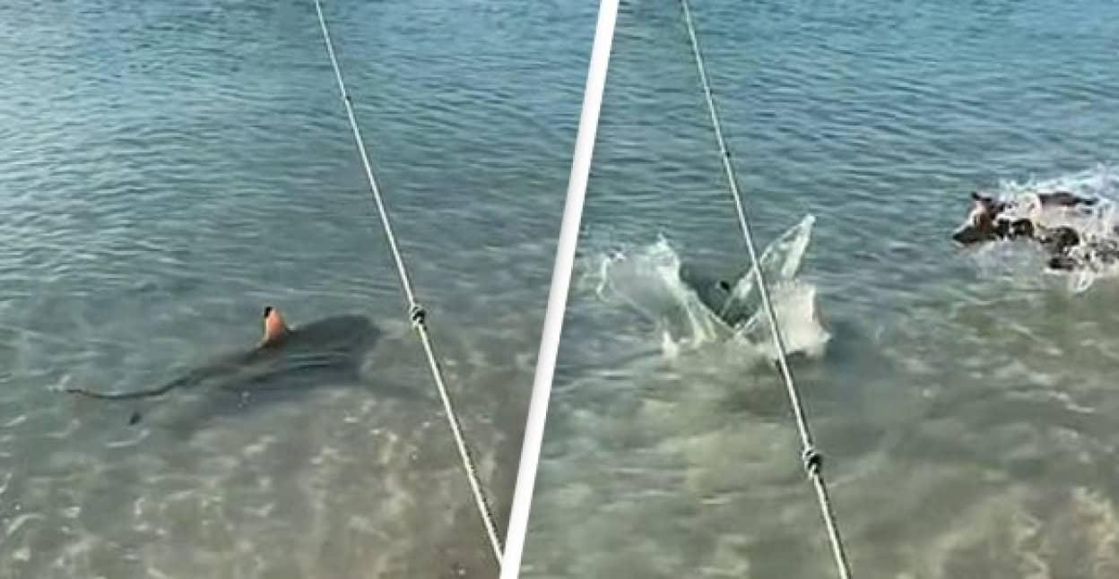 飼い主をサメから守るため海に飛び込んだ犬