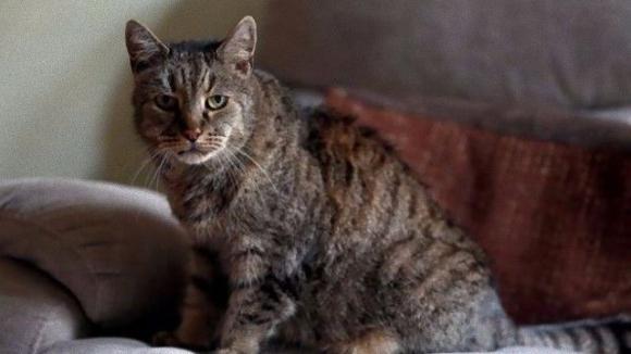【R.I.P.】世界最高齢の猫ナツメグさん、永遠の眠りにつく。享年32歳