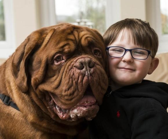 少年の右側から離れようとしない犬。そこには両親も気が付かなかった驚きの事実が隠されていた。