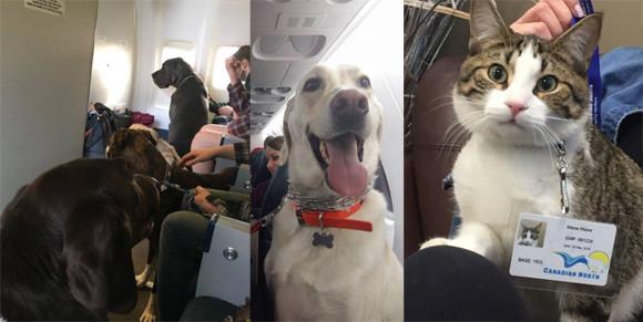 ペットも客室内搭乗OK。大規模な山火事で避難する人々にカナダの航空会社が従来のルールを覆す異例の措置