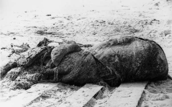 巨大タコ?クジラ?浜辺に打ち上げられた謎の巨大肉塊「グロブスター」の正体をめぐる研究者たちの物語(アメリカ・1896年)